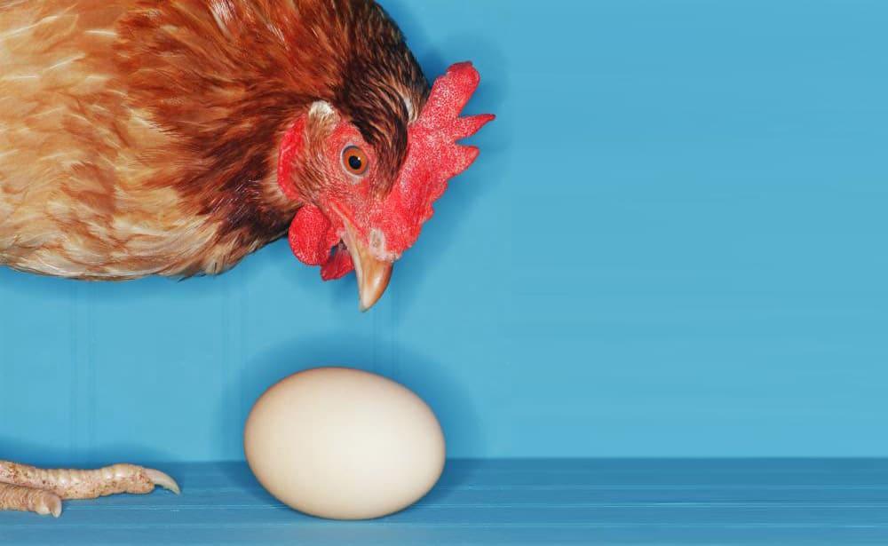 L'œuf et la poule