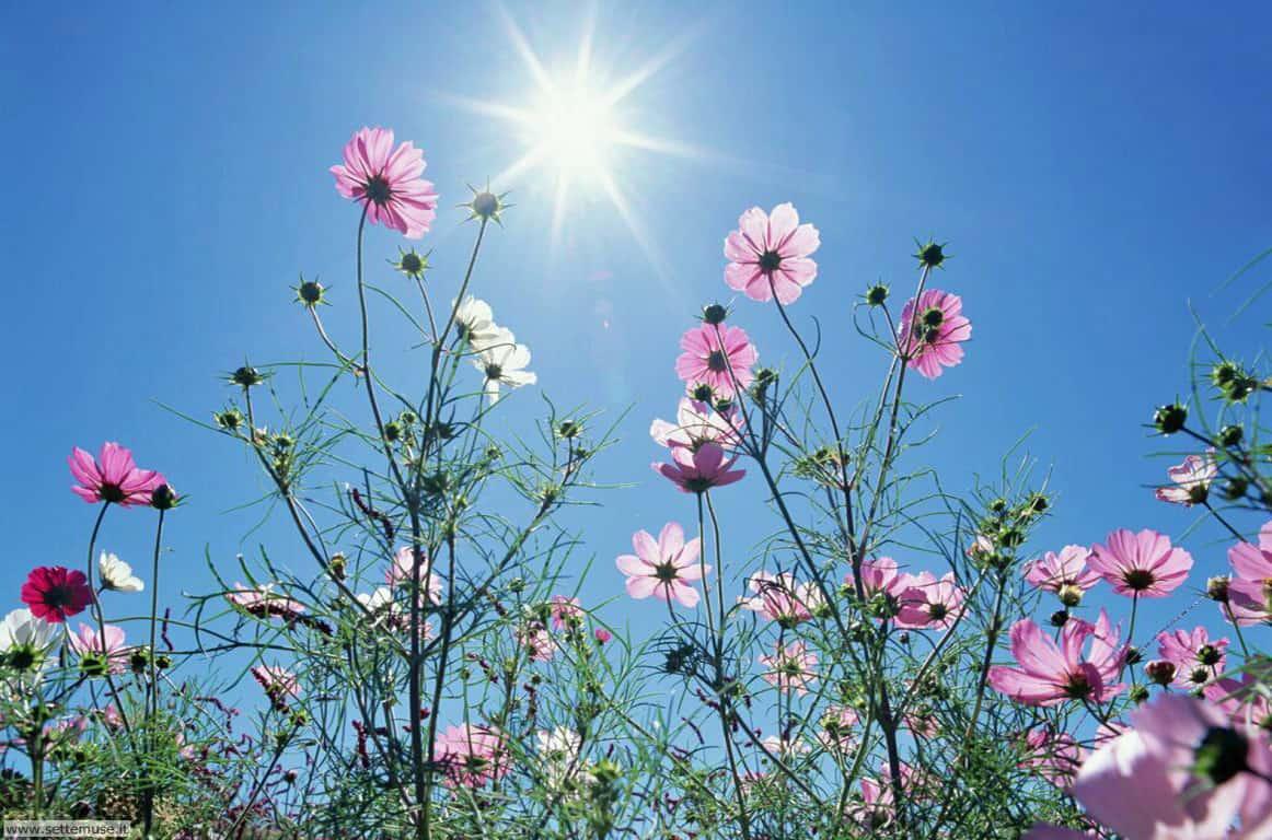 Le Soleil donne