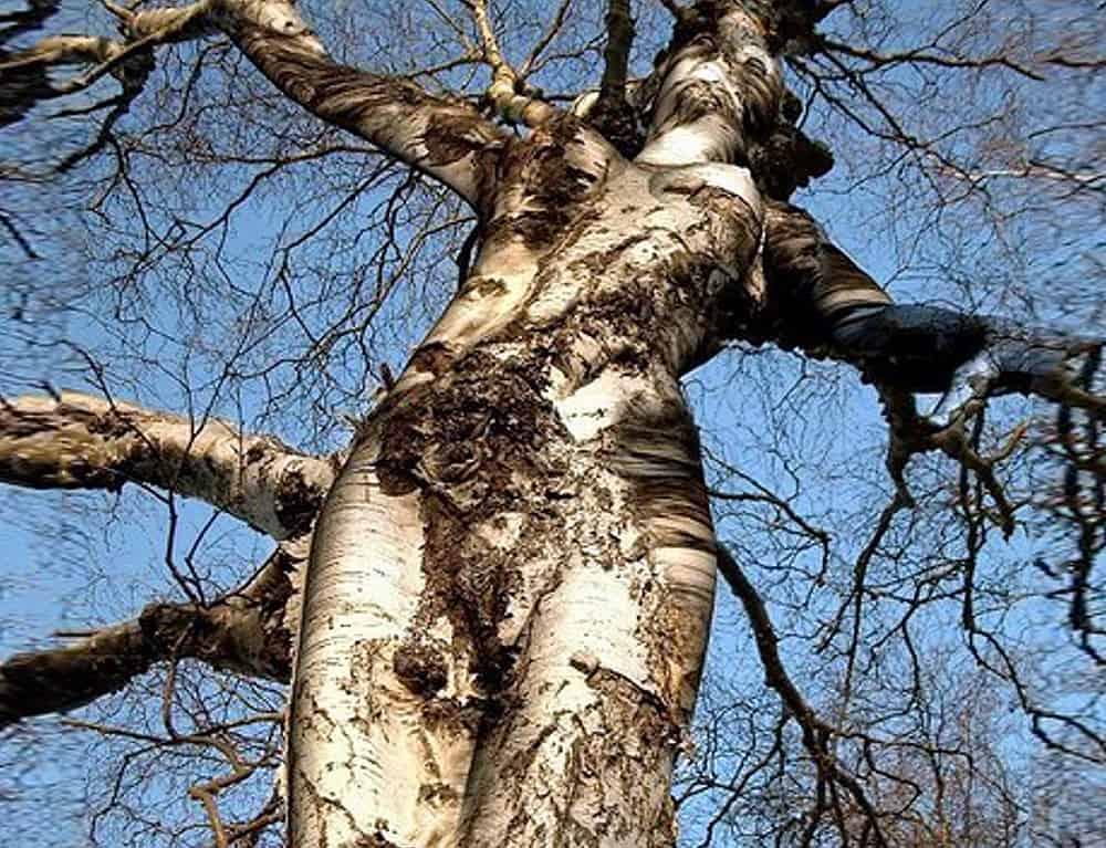 Les fruits de l'arbre