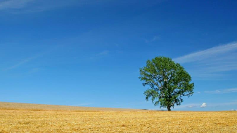 Simple comme le ciel
