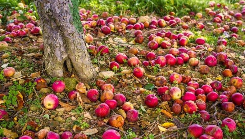 Les fruits du Jour