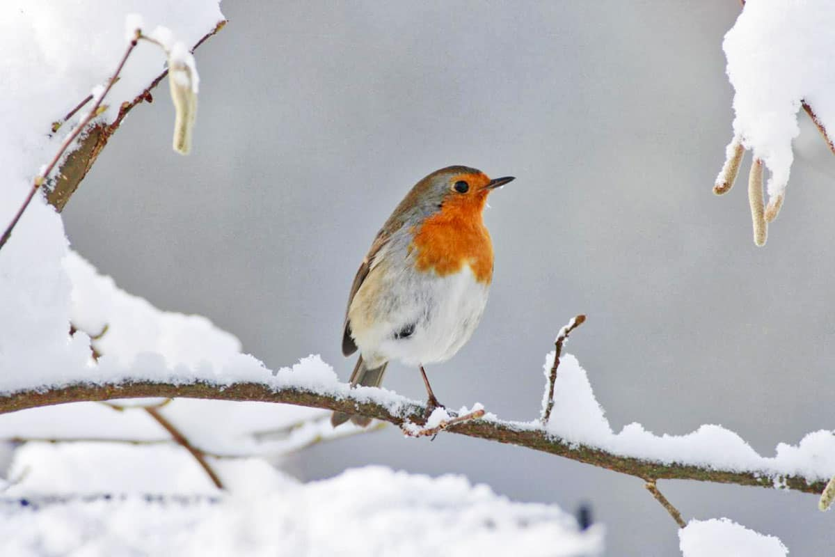 Le silence de l'oiseau